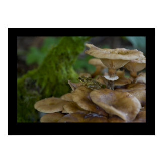 Frog on Toadstool Poster