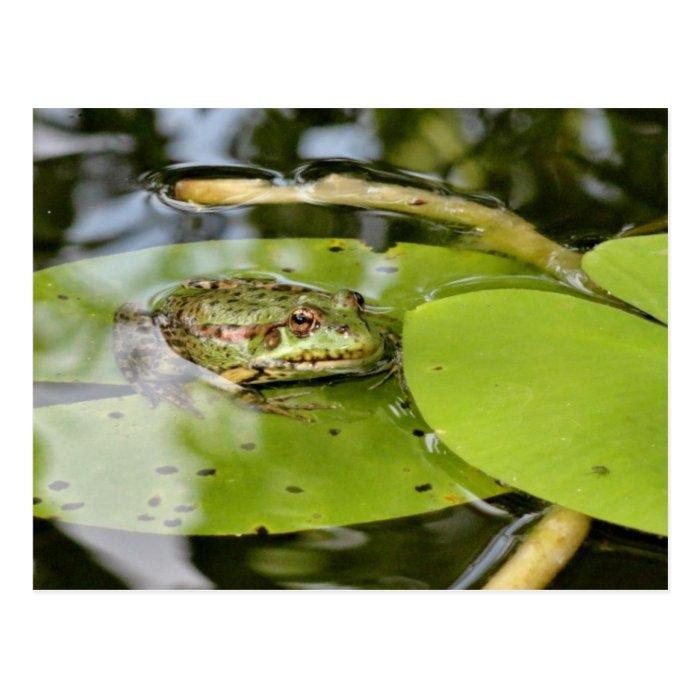 Frog On Water Lily Leaf Postcard