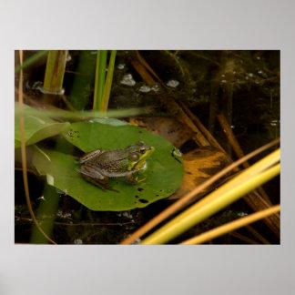 frog pad poster