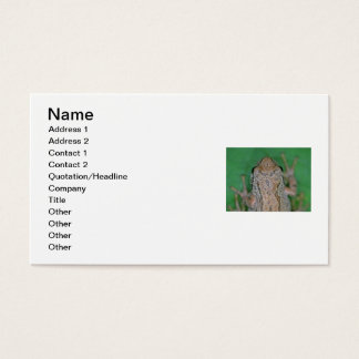 Frog Photo Business Card
