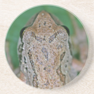 Frog Photo Drink Coaster