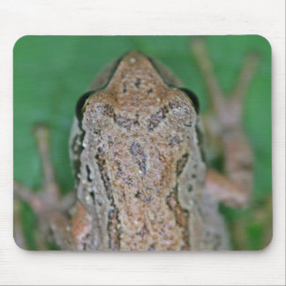 Frog Photo Mouse Pad