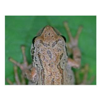 Frog Photo Postcard