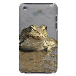 Frog Photograph  iTouch Case Barely There iPod Cover