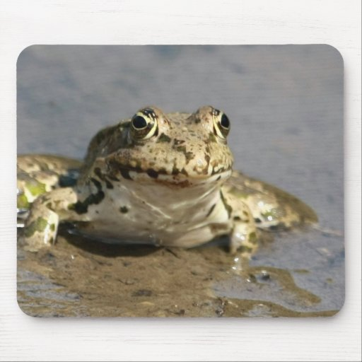 Frog Photograph Mouse Pad