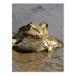 Frog Photograph Postcard