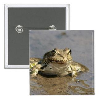 Frog Photograph Square Pin