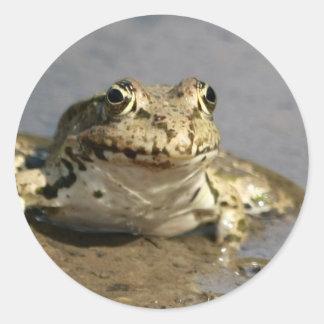 Frog Photograph Sticker