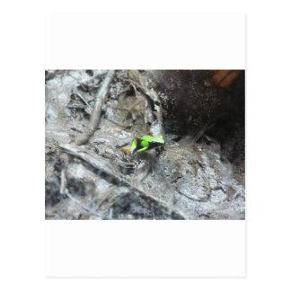frog,poison dart frog postcard