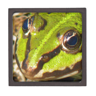 frog-pond-785 jewelry box