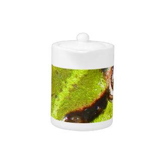 frog-pond-785