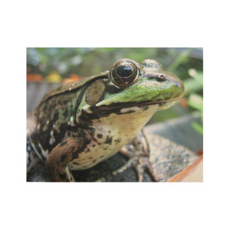 Frog Portrait Wood Poster