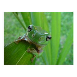 Frog Postcards