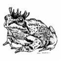 Frog Prince photosculpture