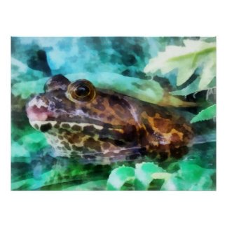 Frog Ready to be Kissed Poster