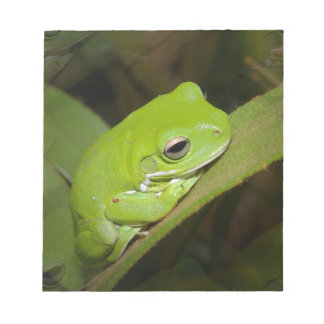Frog Reflections Notepad