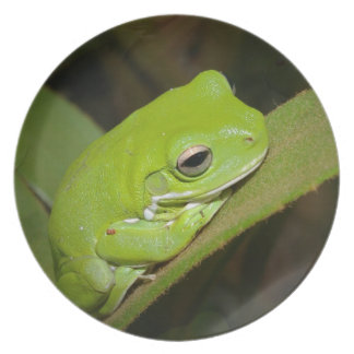 Frog Reflections Plate