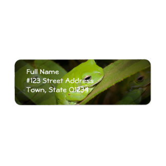 Frog Reflections Return Address Label