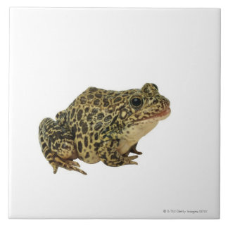 Frog shadow ceramic tile