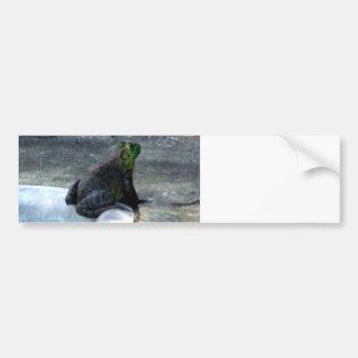 Frog Sitting By A Pool Bumper Sticker
