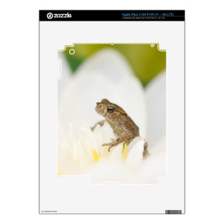 Frog sitting in a flower iPad 3 Skin