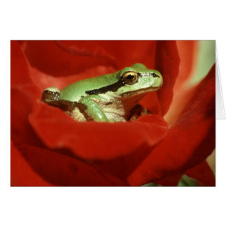 Frog Sitting on Red Rose Card