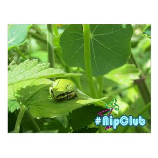 Frog sleeps on Catnip #Nipclub Postcard