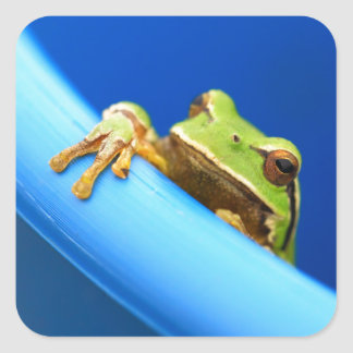 Frog Square Sticker