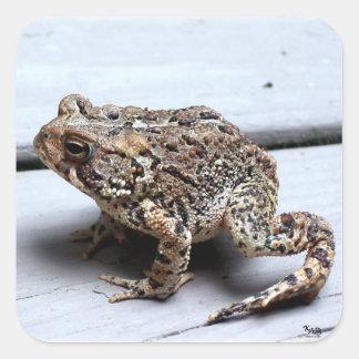Frog Square Sticker