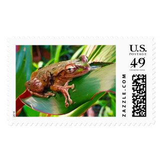 Frog Stamp