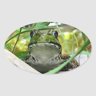 FROG OVAL STICKERS