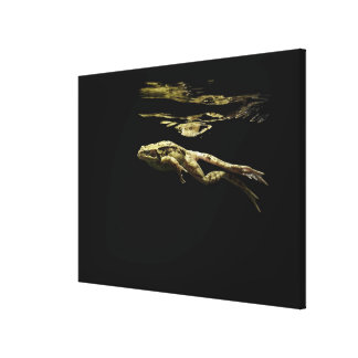 frog swimming in the dark just below the surface canvas print