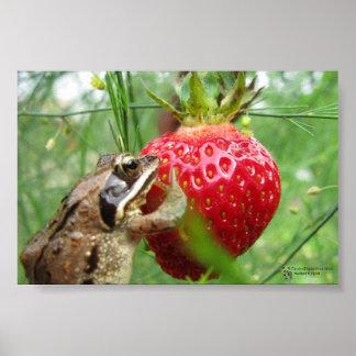 Frog that Loves Strawberries Poster