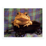 Frog Toad in black wagon with plaid background Postcard