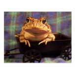 Frog Toad in black wagon with plaid background Post Card
