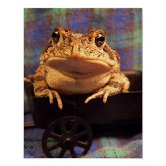 Frog Toad in black wagon with plaid background Poster