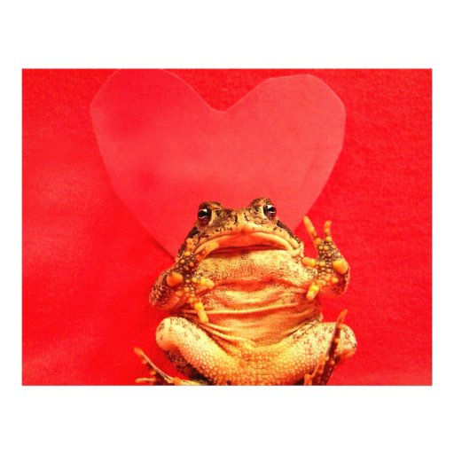 Frog Toad in front of red heart photo Flyer Design