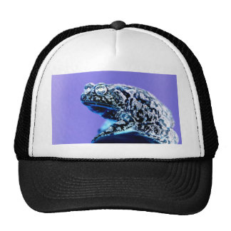 Frog toad  photo inverted blue black mesh hats