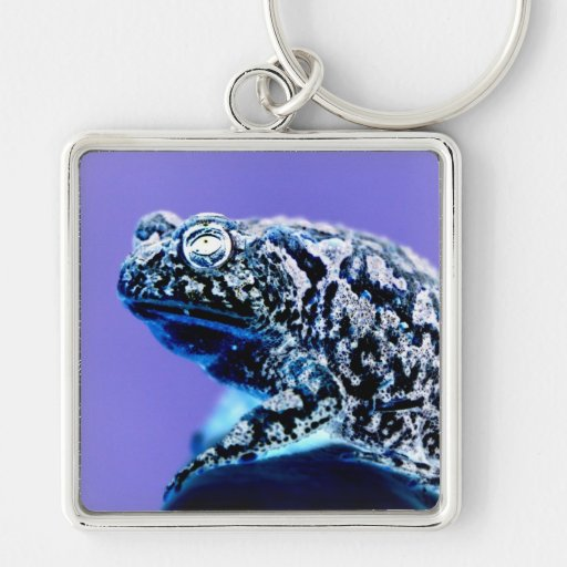 Frog toad  photo inverted blue black keychains