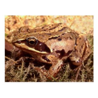 Frog / Toad Postcard
