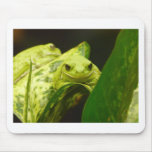 frog,tree frog mouse mats