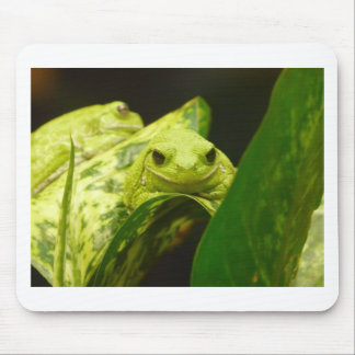 frog,tree frog mouse pad