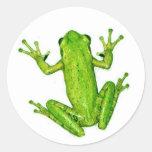 Frog Tropical Rainforest Tree Frog Sticker Art