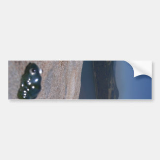 Frog View Bumper Stickers