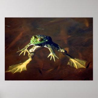 Frog Walker Poster