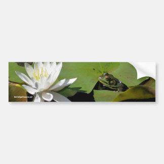 Frog Water Lily Flower Photo Bumper Sticker Car Bumper Sticker