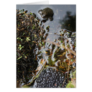 Frog with Frog Spawn Card
