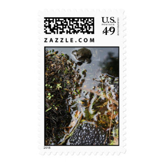 Frog with Frog Spawn Postage
