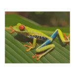 Frog Wood Canvas