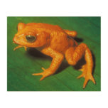 Frog Wood Canvases